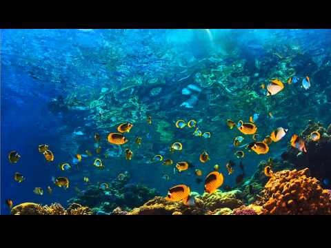 Abraham Hicks - Rampage of Well being