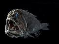 The Deepest Ocean in The World - The Mariana Trench - Scary Documentary (Earth Documentaries)