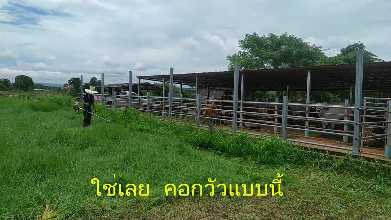 .ใช่เลยๆ  คอกวัวและแปลงหญ้า  .Techniques for building a cattle pen.