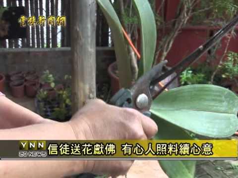 雲林新聞網-西螺回收蘭花