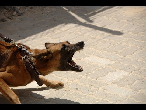 Dog Aggression Training: Teaching an Aggressive Dog to Socialize