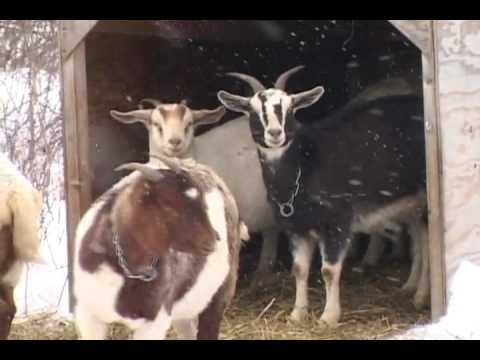 Cross Island Farms - JCJDC.flv