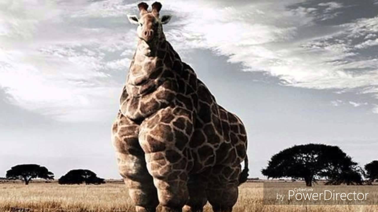 Top 10: Die hässlichsten Tiere der Welt - YouTube
