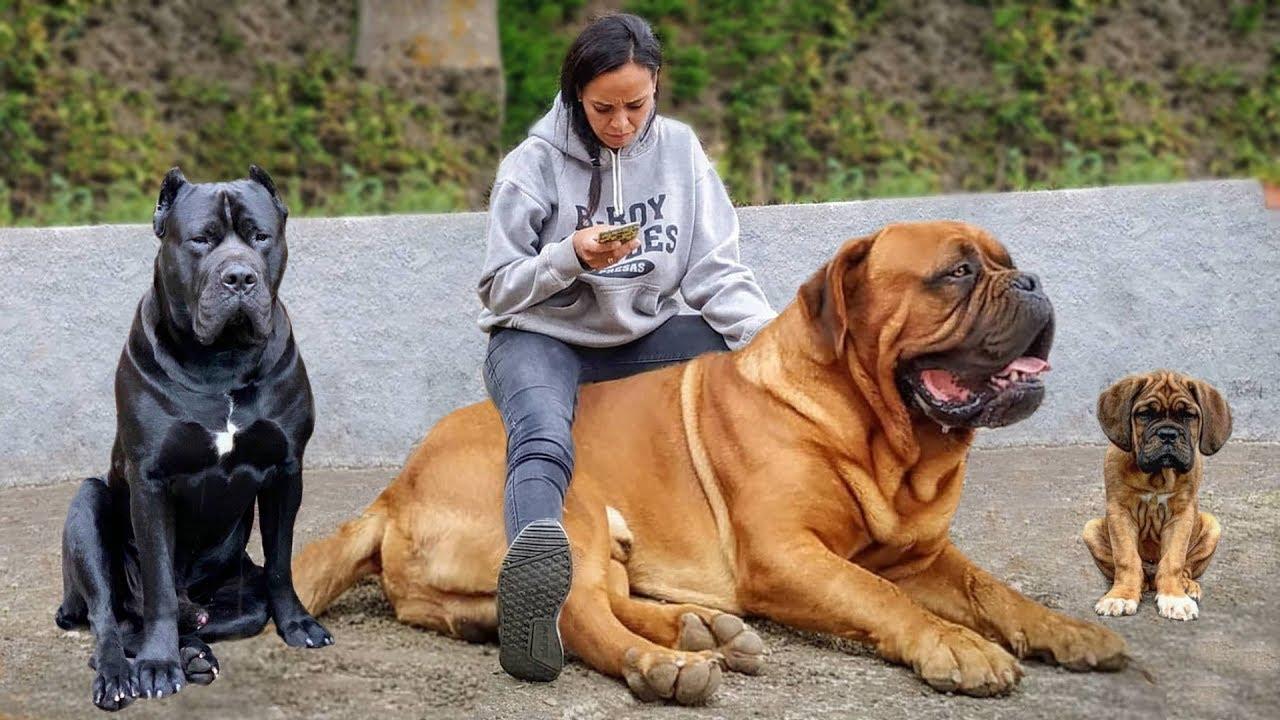 Most Amazing French Dog Breeds