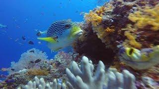 Raja Ampat, West Papua - Indonesia - April 2018 - Diving