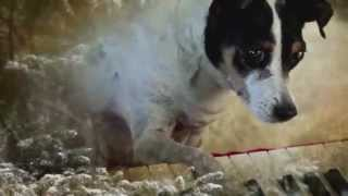 Laurie Anderson - Heart of a Dog [Official Trailer]