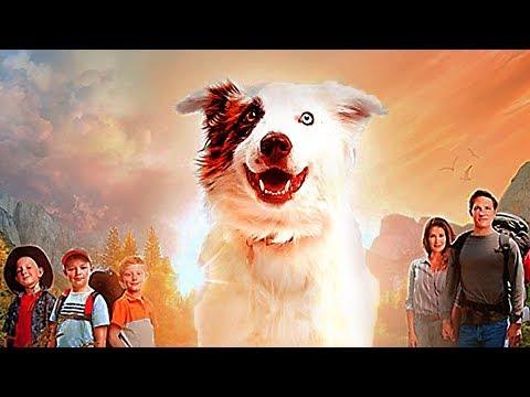 THE STRAY Trailer (2017) Family, Dog Movie HD