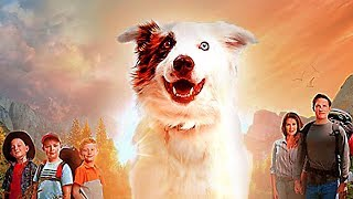 THE STRAY Trailer 2017 Family Dog Movie HD