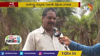 Farmer Rajashekar Success Story in Date Palm Cultivation In Polythene Covers | Matti Manishi