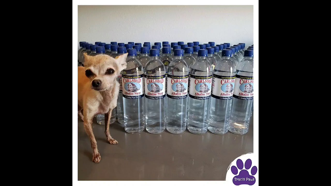 Keeping Your Pets Hydrated!