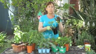 Summer Vegetable Garden Planting for Southern California : Garden Space