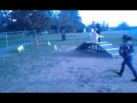 Macee at the dogpark