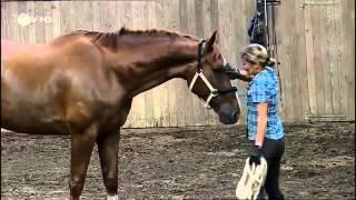 Löwenzahn - 248 Pferde - Der rettende Sprung
