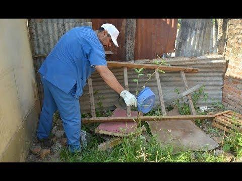 Lanzaron una campaña para la eliminación de criaderos de mosquitos