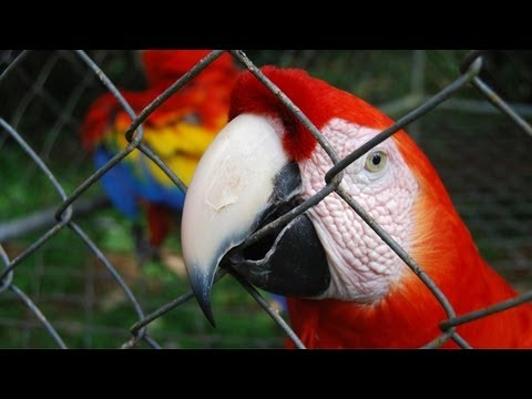Costa Rica Will Close Its State Zoos and Set Many of the Animals Free