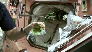 Cooking Up Some Space Spinach | CSA ISS Science HD Video