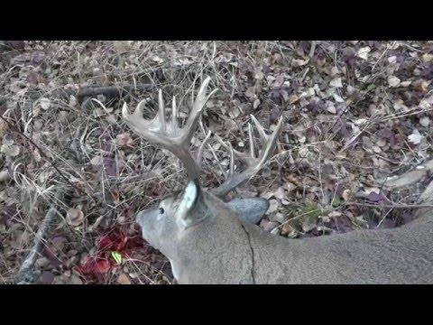 2015 Alberta whitetail deer hunt