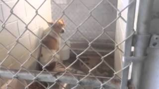 Delano Animal Shelter, Delano California