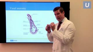 Vasectomy Reversal Fertility Options After Vasectomy