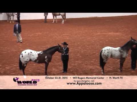 2015 World Championship Appaloosa Show - YouTube