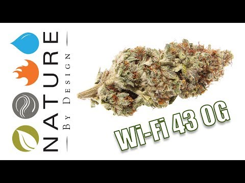 Wi Fi 43 OG   Strain of the Day
