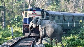 Animal vs Tain - Animals Hit By Train Compilation #2