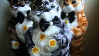 Поющий кот игрушка в очках