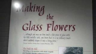harvard museum of natural history glass flowers exhibit