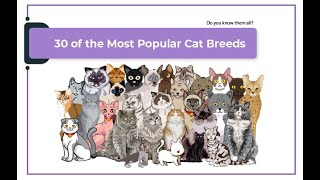 30 of the most popular cat breeds.  You probably don't know all the types!