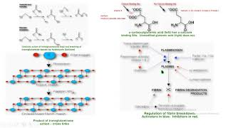 Por deficit k de coagulacion vitamina de la trastornos
