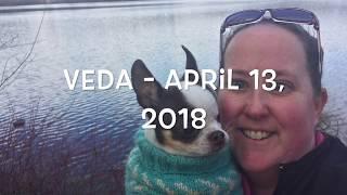 3 Dogs & A Vlog - VEDA 4/13/18