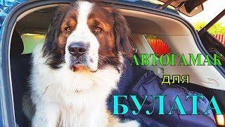 Автогамак для собак / Покупки для собаки / Московская сторожевая Булат в машине