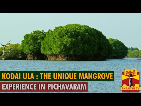 Kodai Ula : The Unique Mangrove Experience in Pichavaram - Thanthi TV