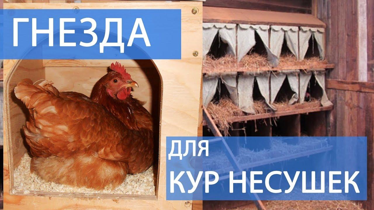 Как сделать гнездо для кур чтобы они не клевали яйца своими руками