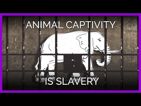 Animal Captivity Is Slavery