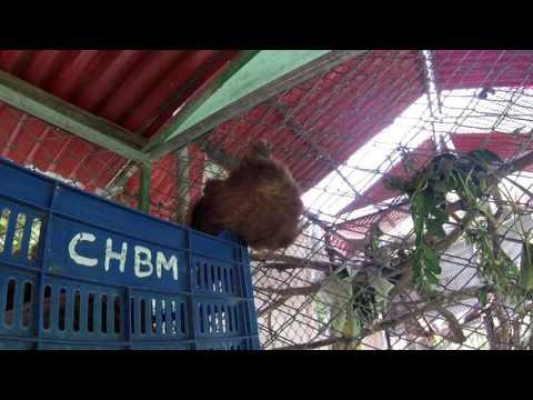 Volunteering at the Costa Rica Animal Rescue Center