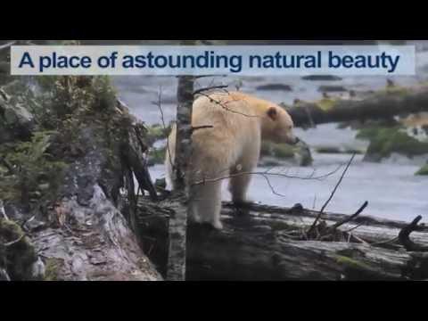 fuel barge crash in Great Bear Rainforest