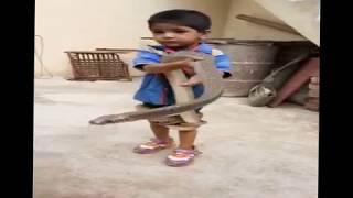 Small Baby Plays With king cobra Snake || DEADLY SNAKE
