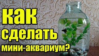 КАК СДЕЛАТЬ МИНИ-АКВАРИУМ?(Всем привет, в этом видео я покажу и расскажу как сделать небольшой и бюджетный аквариум для новичка! ______..., 2016-08-24T11:21:06.000Z)