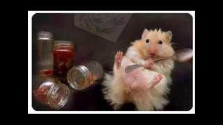 Good Hamster Names