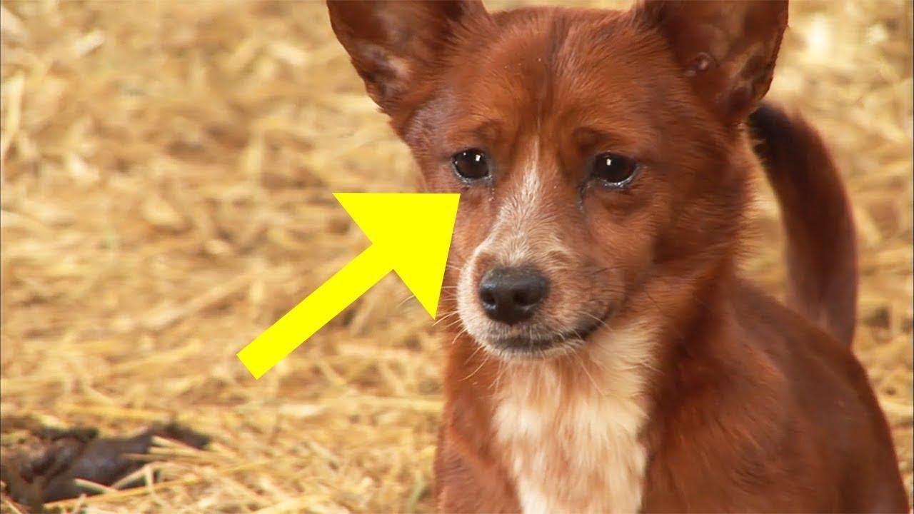 zeckenimpfung hund