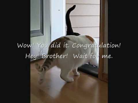 A smart cat opens the door
