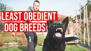 Top 10 Least Obedient Dog Breeds