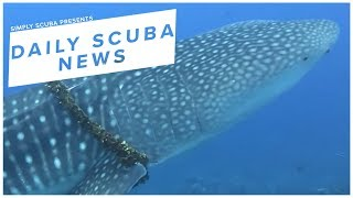 Daily Scuba News - Freediving Family Save Whale Shark