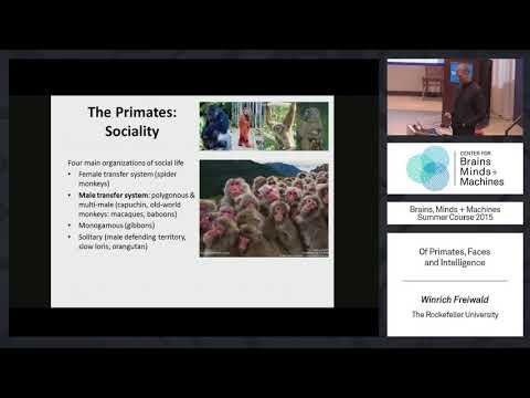 Lecture 1.5: Winrich Freiwald - Primates, Faces, & Intelligence