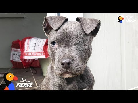 Tiniest Orphan Puppy Rescues Depressed Mama Dog - RAISIN | The Dodo Little But Fierce