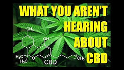 What You Aren't Hearing About CBD | Martin Lee, Project CBD