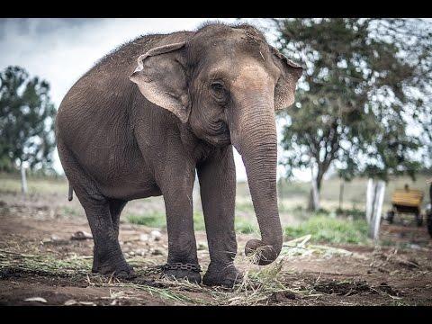 O Santuário de Elefantes -  A história de Maia e Guida