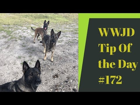 Getting a new dog, What Would Jeff Do? Dog Training Tip of the Day #172