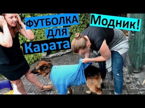 VLOG Повели собаку в Больницу🐕 Одели футболку на Карата 😅 ЗАЧЕМ? Пули в животных 😵 ОГРОМНЫЙ ШРАМ